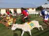 goat-race_1610933i